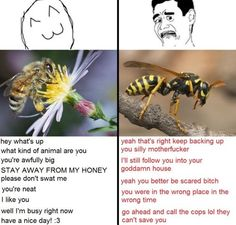 Pin by michael i. cota on humor:: so true/relatable You Funny, Funny Stuff, Funny Shit, Funny Things, Random Stuff, Big Bee, Bees And Wasps, Best Of Tumblr, Can't Stop Laughing