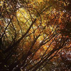 #fall #autumn #rifugiofioridelbaldo #montebaldo #trekking #igerseverywhere #LaPellicolaCheNonCe #foliage #italy #verona