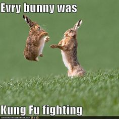 You know the song everybody was kung fu fighting? Well know every BUNNY was kung fu fighting! Humor Animal, Funny Animal Memes, Cute Funny Animals, Animal Quotes, Funny Animal Pictures, Funny Memes, Animal Puns, Funny Easter Memes, Happy Easter Meme