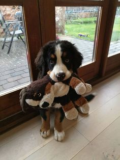 My neighbors Bernese puppy with her own mini-me. Click here for more adorable animal pics!