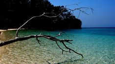 Port Blair is the capital of Andaman and Nicobar Islands which is the Union territory of India. Marine National Park, National Parks, Cellular Jail, Indian Freedom Fighters, Ross Island, Port Blair, Forest Department, Andaman And Nicobar Islands, Union Territory