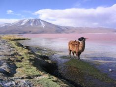 La Laguna Colorada, Potosi, Bolivia
