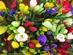 Freesia (Bouquet) - Le Cannet