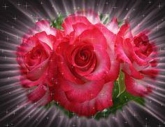 """Desgarga gratis los mejores gifs animados de rosas. Imágenes animadas de rosas y más gifs animados como buenas noches, gracias, nombres o animales"""""""