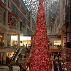 Canada's largest Christmas tree #beautiful #christmastree #shoppingtime #christmas #tistheseason #torontophoto #toronto #ontario #canada #mall #shoping #photooftheday #iphonephotography