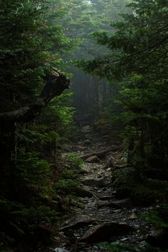 The forest of lost souls, Japan, by Toshiyuki Ueda