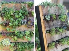 Upcycle pallet into herb garden