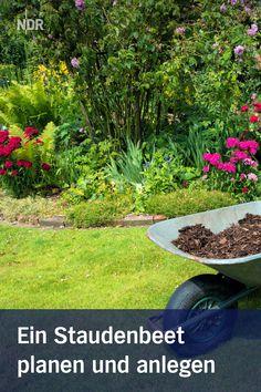 Plants, Pictures, Powdery Mildew, Ornamental Plants, Cold, Plant, Planets