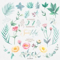 Peonies Watercolor Flowers Clipart. Hand painted от ReachDreams