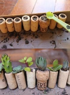 Mini macetas hechas con corchos.