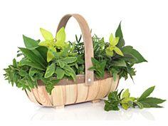 114 meilleures images du tableau autour de la plancha eno herbes aromatiques jardins et jardinage