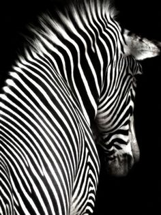 are they black with white stripes or white with black stripes??