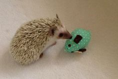 he loves playing with his little friend !!!