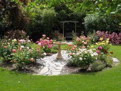 Back Yard Rose Gardens