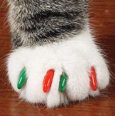 Christmas Claws =^.^=