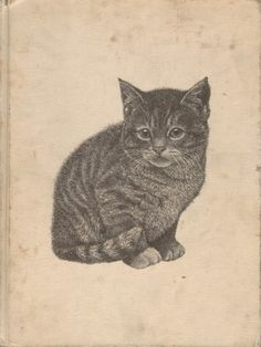 All color book of Kittens