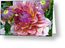 Pink Dahlia Dancer Greeting Card by Susan Garren