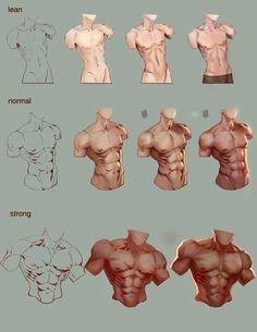 Anatomy. Torso. Male. Muscles. Body type. Tutorial.