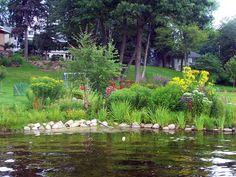 Riparian buffer - this native buffer creates a beautiful shoreline - great idea for S.L. lakeshore.....