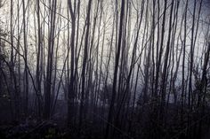 Check out Mystic trees by Dreamy Pixel on Creative Market