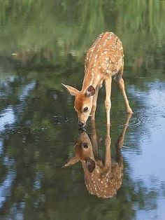 "Fawn / ""You're just as cute as me!"""