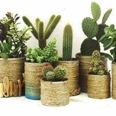 Creative Recycling of Nutella Jars! Succulent Gardening, Succulent Pots, Container Gardening, Deco Cactus, Nutella Jar, Housewarming Gift Baskets, Design Jardin, Nature Plants, Diy Recycle
