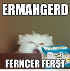 ermahgerd-cat