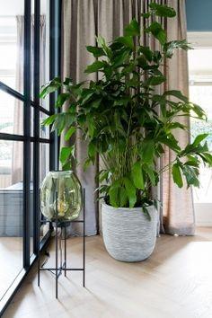 Living Room Interior, Planter Pots, New Homes, Mini, Decor, Seeds, Decoration, Decorating, Deco