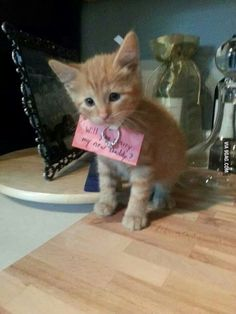 If someone proposes to me like this I swear I am gonna die! - 9GAG
