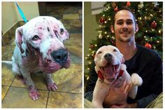 A happy ending for this dog who had a horrible beginning