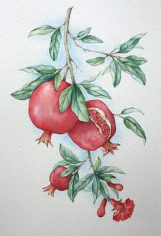 "Рисунок ""Гранаты (2)"". Акварель, А4. Fabric Painting, Painting & Drawing, Painting Abstract, Watercolor Flowers, Watercolor Paintings, Simple Watercolor, Bubble Drawing, Pomegranate Art, Fruits Drawing"