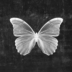 Butterfly In Black Framed Art Print by Cafelab - Vector Black - Art Ancien, Black And White Aesthetic, Stretched Canvas Prints, Black Art, Oeuvre D'art, Lovers Art, Framed Artwork, Wall Art, Find Art