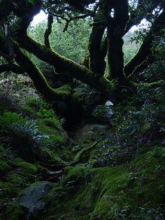 mossy massive trees by Sandra M. Chung, via Flickr