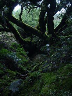 mossy trees and streams
