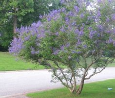6 Small Trees For Small Yards