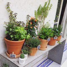 . Composição de vasos de hortas em apartamento no Jardins, SP