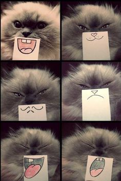 Kitty Cat Cardboard Faces. 2013.