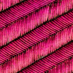 These are the gorget (throat) feathers of an Annas Hummingbird magnified 58x.  Microstructures in the gorget feathers interfere with light to create this brilliant color. Photo by @anandavarma  #hummingbird #feather #iridescence #color #AnnasHummingbird by natgeo