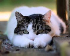 Swallowheart! info:she-cat warrior no mate yet