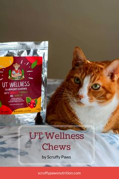 The Scruffy Paws UT Wellness Chews are the 'Best in Class' of Urinary 'Wellness' Chews that help support UT health whether your cat is constantly affected by FLUTD (feline lower urinary tract disease) or not. Cool Cat Toys, Cool Cats, Baby Cats, Cats And Kittens, Ut Health, All Types Of Cats, Cat Diet, Cat Nutrition, Silly Cats