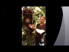 ▶ How to make an Avatar Hanging Tree Fern Pot - PART 1 - YouTube