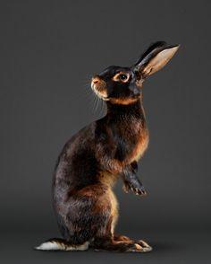 Jack Rabbit, Rabbit Art, Rabbit Song, Animals And Pets, Baby Animals, Cute Animals, Beautiful Creatures, Animals Beautiful, Lapin Art