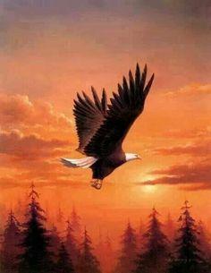 Awsome Eagle....