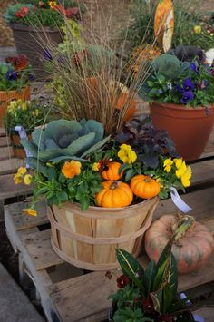 Fall Potted Plants, Fall Planters, Ivy Plants, Garden Planters, Garden Beds, Fall Flower Pots, Fall Flowers, Fall Containers, Succulent Containers
