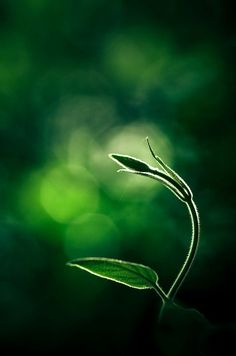 Delicate Green plant immersed in bokeh