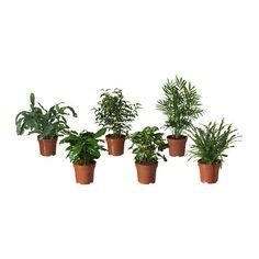 BLADVERK Plante en pot, diverses espèces
