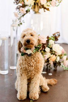 Cute Goldendoodle Dog Ring Bearer with a Flower Collar Dog Wedding, Fall Wedding, Dream Wedding, Girl And Dog, Wedding Trends, Wedding Planner, Wedding Flowers, Wedding Decorations, Marriage