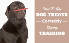 How To Use Dog Treats Correctly During Training