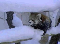 Я просто хочу очистить это чёртов снег! — GIF.D3.RU
