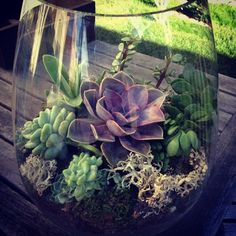 Inspiration for the desktop terrariums that my bf and I want to make for our offices.